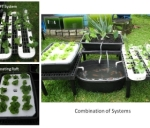 thumbs_Aquaponics-Systems