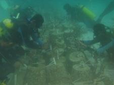 pengikatan terumbu karang