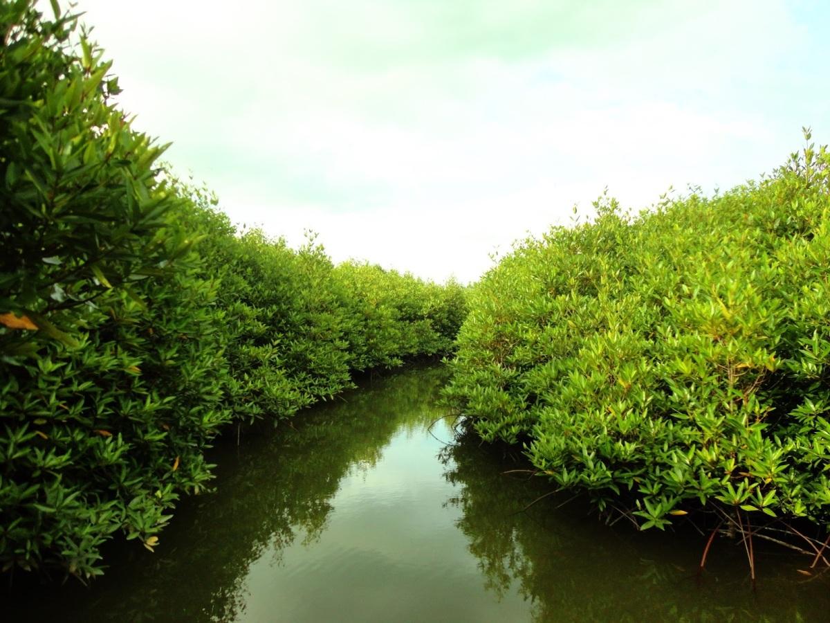 Mengenal Jenis Mangrove