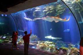 Tips Berwisata Ke Aquarium Agar Lebih Berkesan